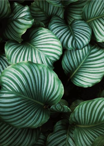 fotoplakat med botanisk stemning med flotte grønne blade