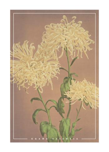 japanske fotokunst plakater med hvide krysantemum