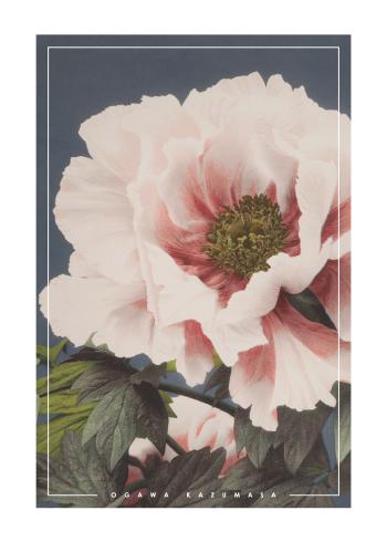 japanske fotokunst plakater med blomster