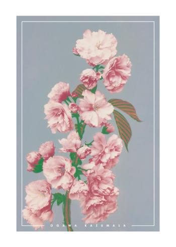 japanske fotokunst plakat med lyserøde blomster