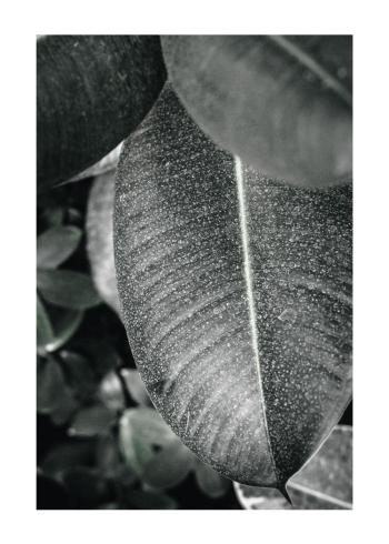 plante plakater med store grønne blade