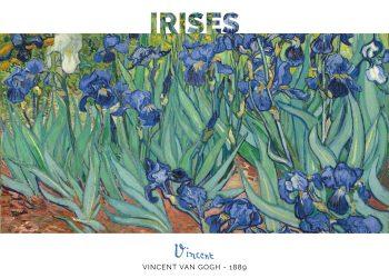 Maleriet er en detaljerig skildring af nogle smukke iriser fra hospitalets have