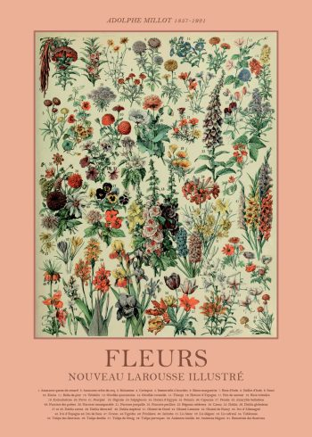 Adolphe millot plakater med blomster