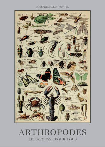plakater med leddyr og krybdyr
