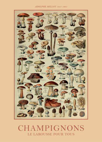 plakat med champignons