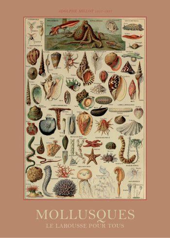 plakat med bløddyr
