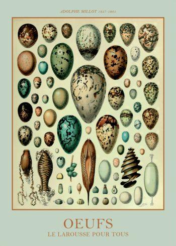 plakater med æg