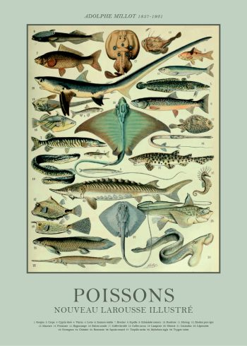 fiske plakater