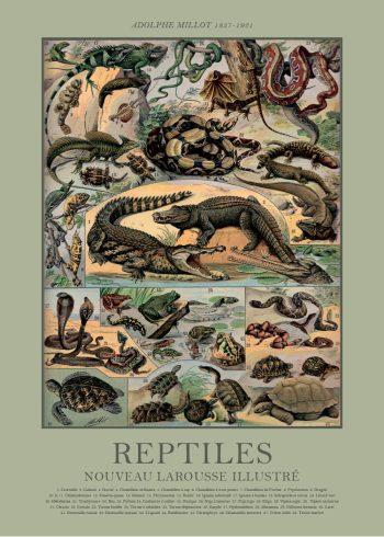 plakater med alligator af adolphe millot