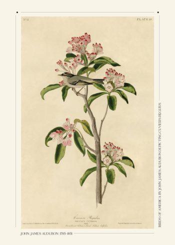 Cuviers regulus blomster plakat af John James Audubon