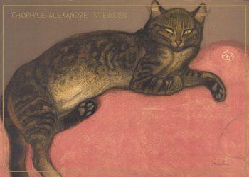 kat på en rød pude