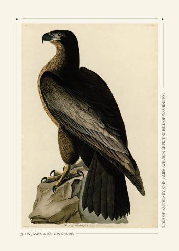 Bird of Washington - John James Audubon