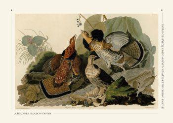 ruffed grouse plakat af John Jame Audubon