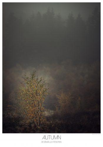 mørke farver med et træ i fokus hvor bladene er brune