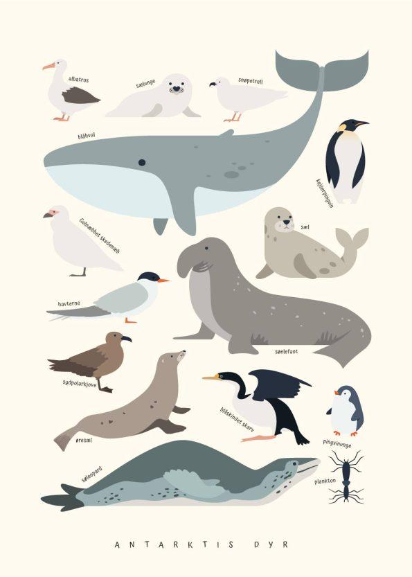 hval, sæl, pingvin og andre dyr fra antarktis på rå hvid baggrund