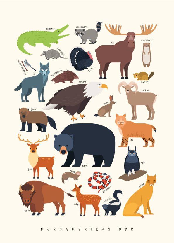 dyr fra nordamerika på gul baggrund