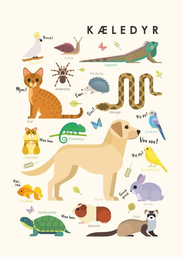 kæledyr i forskellige farver på rå hvid baggrund